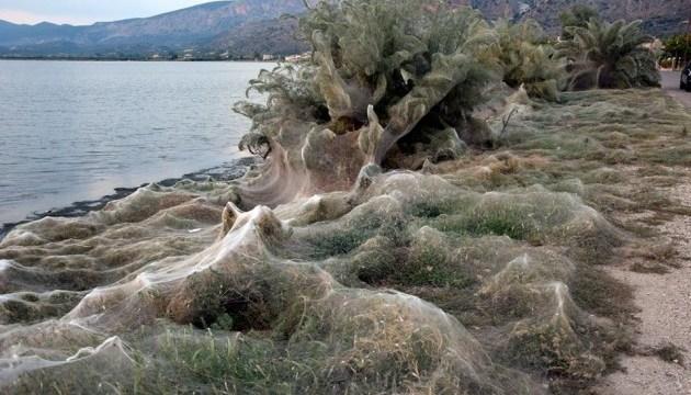Грецький пляж огорнула велетенська павутина