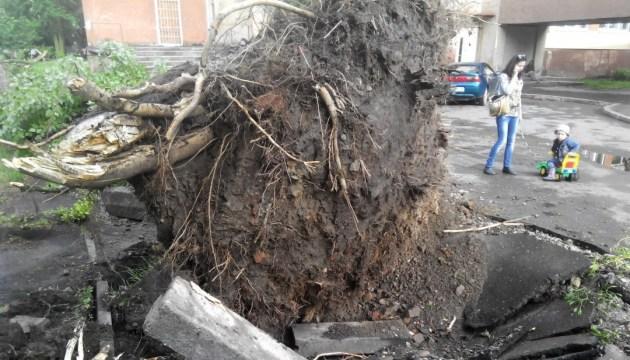 Ураган у Львові повалив дерева, зламав бігборди і пошкодив зупинки