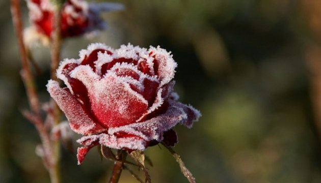 Ground frosts expected in Ukraine on Oct. 1