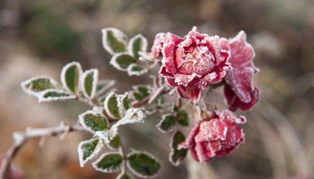 От заморозков до +20°: на выходные обещают температурные