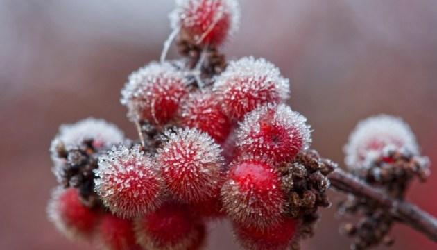 Синоптики предупреждают о ночных заморозках в ряде областей