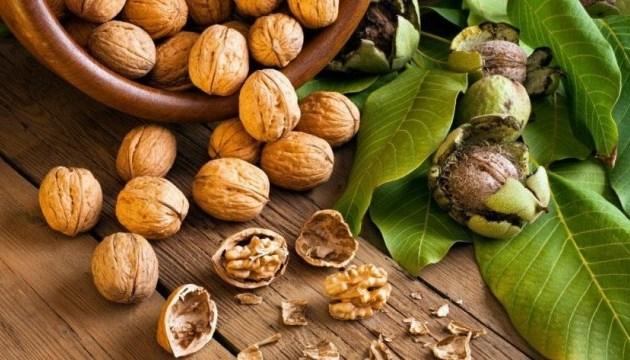 Exportaciones de nueces ucranianos ascienden a $67,1 mil millones en siete meses