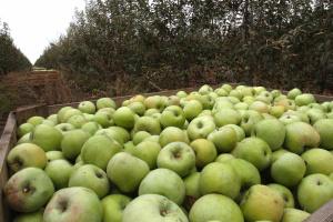 В Украине и Польше дорожают яблоки - эксперты