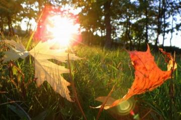 キーウ市の「おばあちゃんの夏」で最高気温20度、引き続き1週間温暖な日が続く見通し