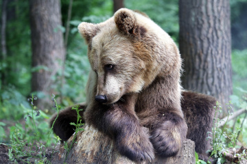 La réserve naturelle « Domazhyr » invite à prendre un petit-déjeuner avec des ours