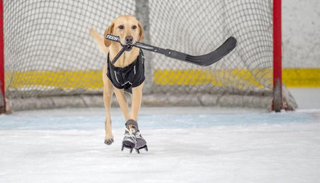 У США пес навчився кататися на ковзанах