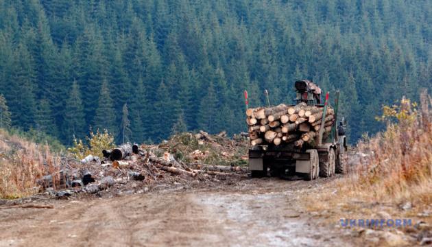 Коррупция вокруг украинского леса – глазами британцев