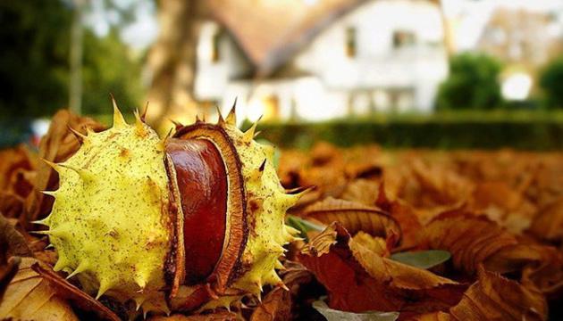 Цієї осені у Києві зафіксували вісім температурних рекордів