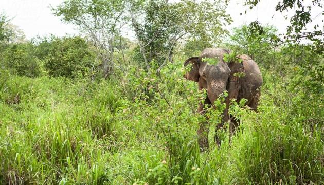 На Шри-Ланке спасли упавшего в колодец слоненка