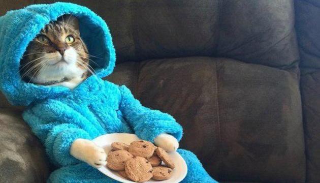 Піжамна вечірка з котами: Держдеп випадково розіслав курйозні запрошення