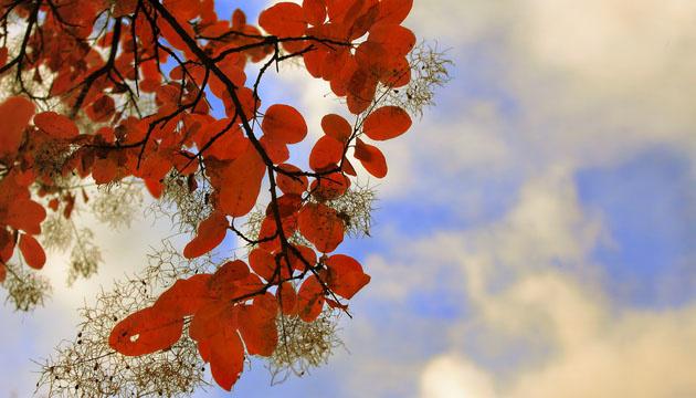 19 жовтня: народний календар і астровісник