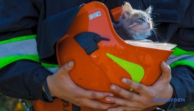 Надзвичайні звірі: закарпатські рятувальники розпочали