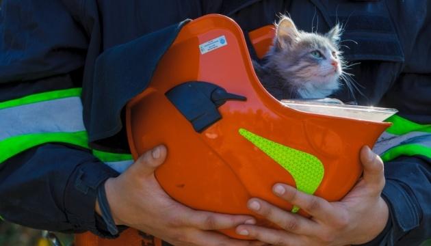 En Ukraine, les sauveteurs de la région de Transcarpatie ont lancé une campagne en faveur des animaux (photos)