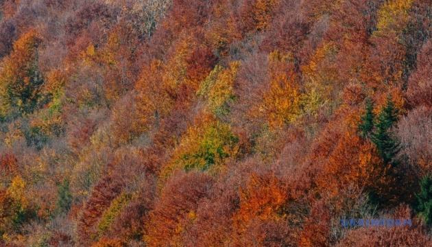 Фотограф показал мистику оранжевого Закарпатья