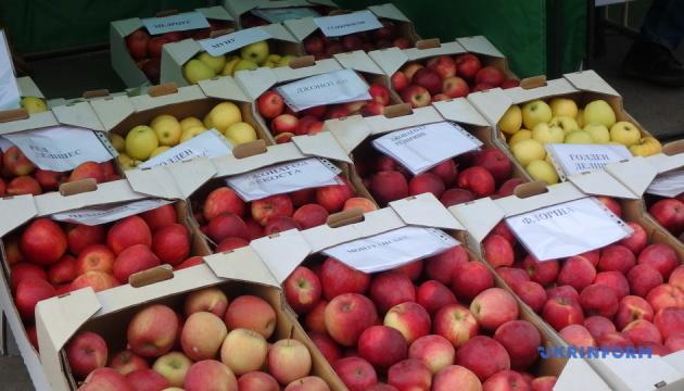 В Винницкой области провели II Международный яблочный фестиваль Apple Bar