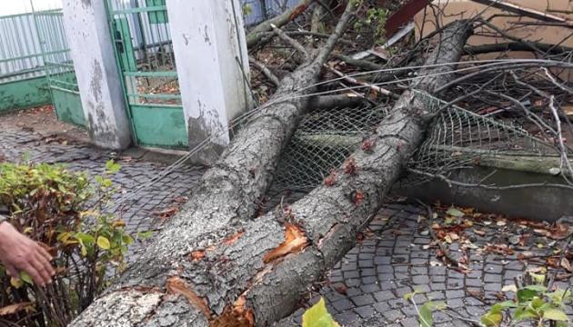 Ураган в Ужгороде повалил деревья и повредил здания
