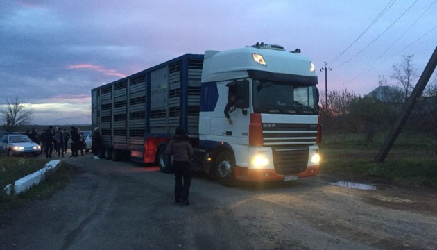 Фуру с овцами разгрузили в Тульчине - 54 животных погибли
