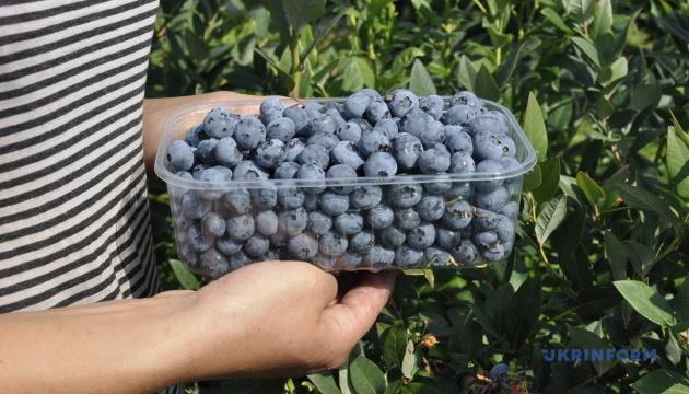 Підприємство з Житомирщини експортувало в Європу тисячу тонн лохини