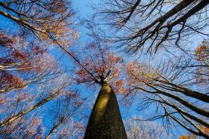Держлісагентство рекомендує підприємствам реалізовувати деревину через ProZorro