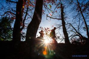 В Украине на начало года сертифицированы 4,8 миллиона гектаров леса