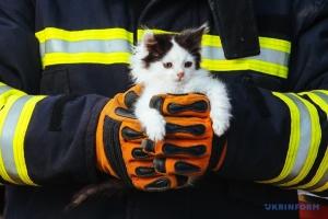У Дніпрі горіла ветлікарня — врятували п'ятьох кошенят і двох цуценят