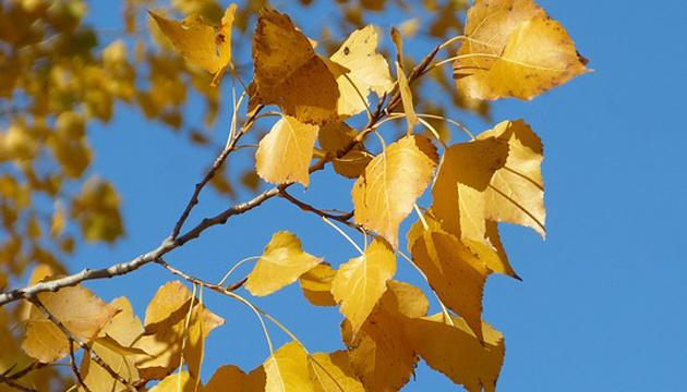 2 ноября: народный календарь и астровестник