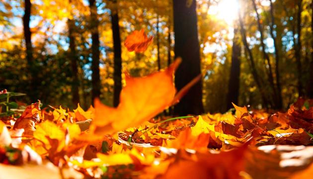 5 листопада: народний календар і астровісник