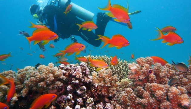 Побачити підводний рай - вибираємо морську прогулянку в Єгипті