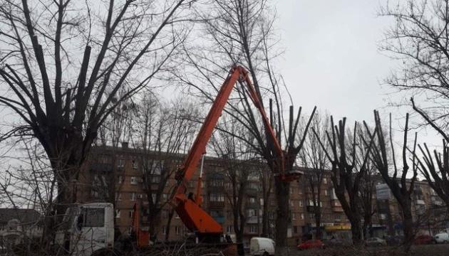 У «Київзеленбуді» пояснили, чому необхідно обрізувати крони дерев