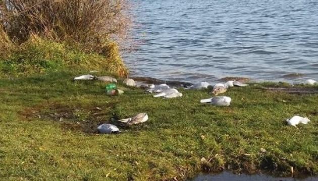 Масову загибель птахів виявили на берегах тернопільського озера