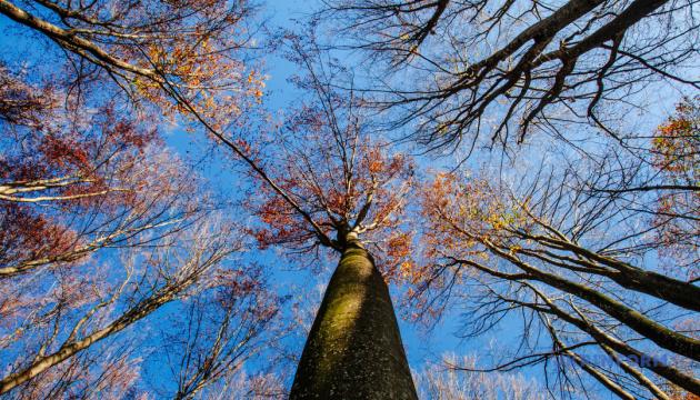 Лісова галузь України торік сплатила 6,2 мільярда податків та ЄСВ - Мінагро