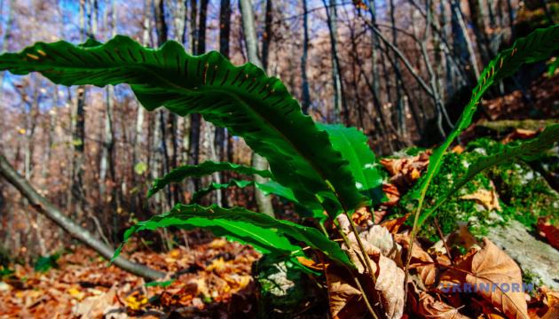 В Украине в прошлом году воссоздали 44 тысячи гектаров лесов - Госагентство