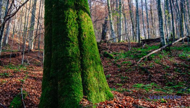 В Україні запровадили електронну систему обліку деревини