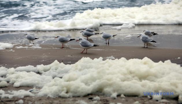Costa del Mar Negro en Odesa cubierta de espuma