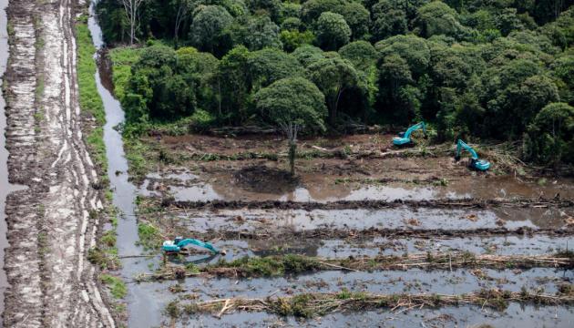 Greenpeace звинувачує виробника Oreo в знищенні
