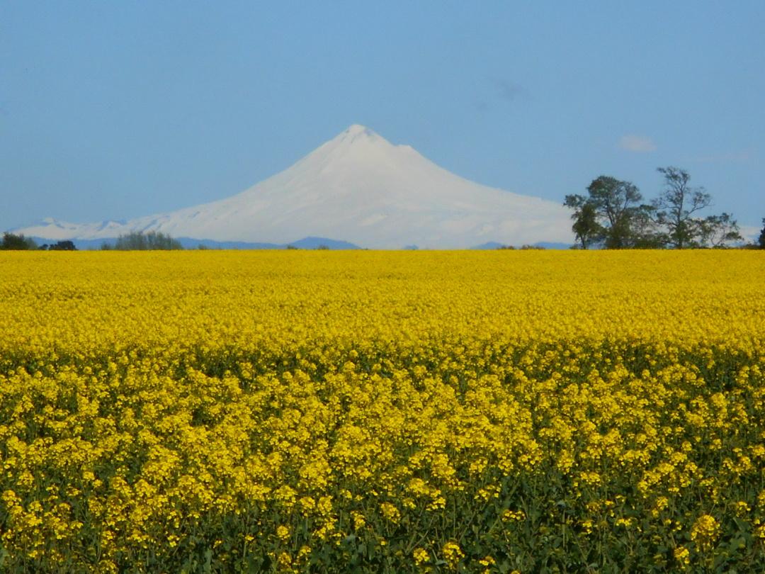 Чилі, вулкан Вільяріка