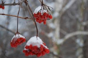 Неделя начнется со снега и морозов