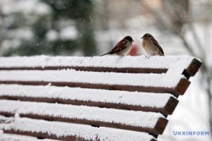 Українцям на четвер обіцяють сніг, дощ та ожеледицю