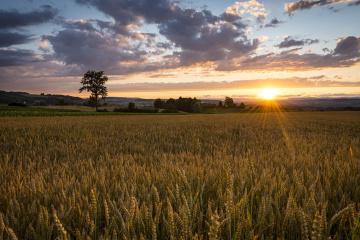 Parliament adopts land market law