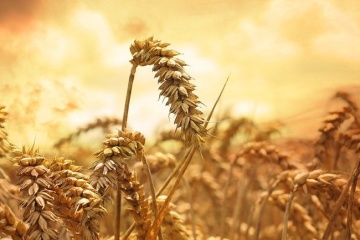 Ucrania está dispuesta a aumentar las exportaciones de trigo a Arabia Saudí