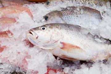 Las exportaciones de pescado congelado ucraniano aumentan un 43%