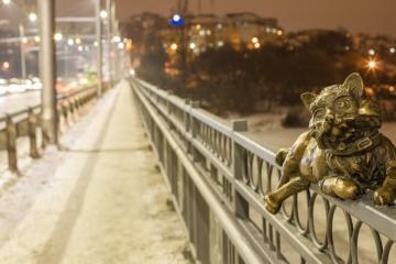 文尼察大桥上来了一群可爱的小家伙