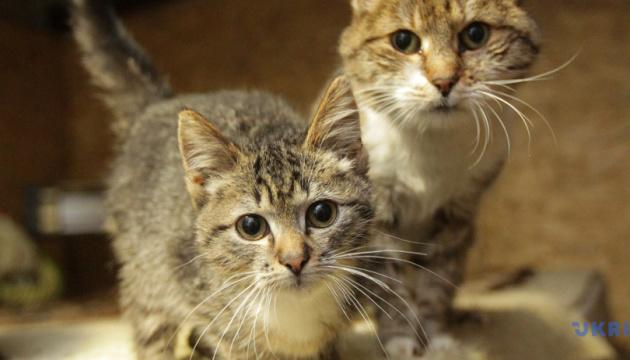 Коти хворіють на COVID-19 і можуть заразитися від людей - вчені