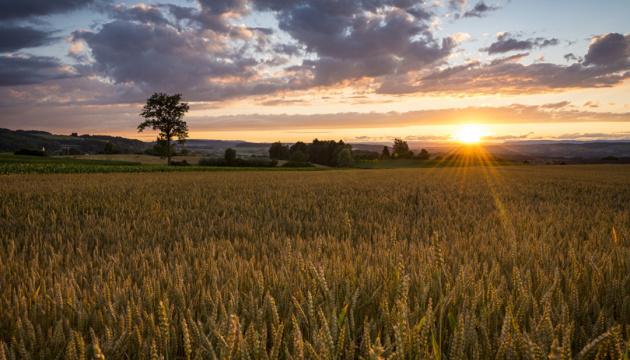 У Херсонській області інвентаризують землю