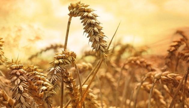 В Минэкономики планируют экспортировать 17,2 миллиона тонн пшеницы
