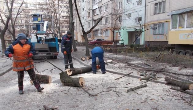 """Мораторій на """"омолодження"""" дерев у Києві: чому і для чого?"""