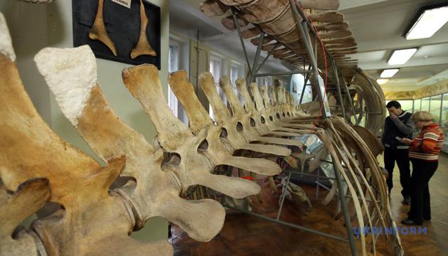 Музей природи в Харкові: колекція в 250 тисяч експонатів