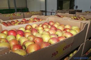 Україна минулого сезону збільшила експорт яблук в 1,5 разу