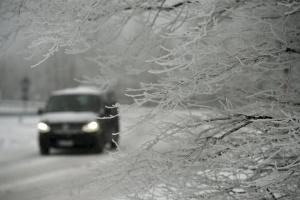 На Одещині внаслідок падіння дерев пошкоджені понад 100 автівок — ОДА