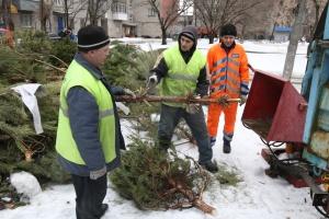 В Днипре новогодние елки пускают на брикеты для отопления